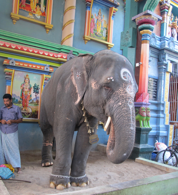 Indien pondicherry elefant baermonster